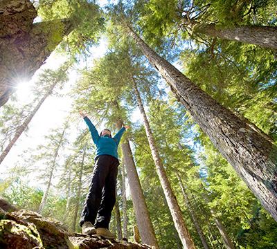 A person standing with arms outstretched in a forest of tall trees